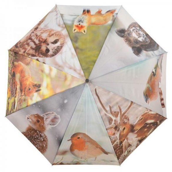 Téli esernyő