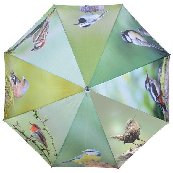 Madaras esernyő